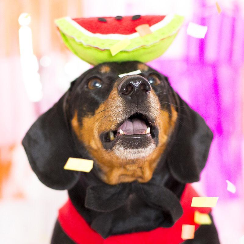 Conheça Eusébio e Floriano, os cachorros bauruenses mais estilosos que você respeita!