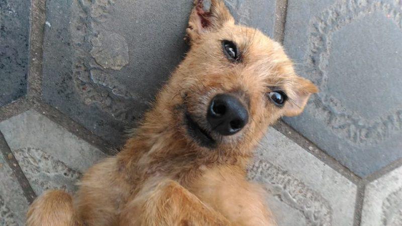 Prefeitura de Bauru promove campanha de adoção de animais neste domingo